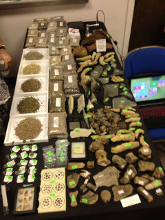 Houston Fossil, Mineral, Jewelry, and Archaeological Trade Show