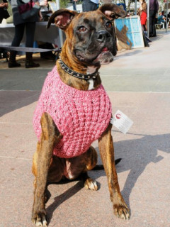 News_Janice Schindeler_The Community Cloth_dog_sweater