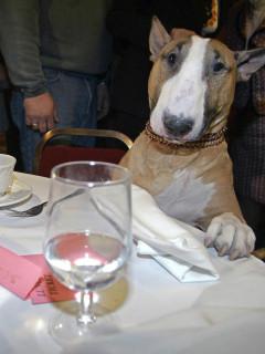 News_dog_at table
