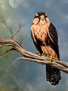 Feathered Friends Art