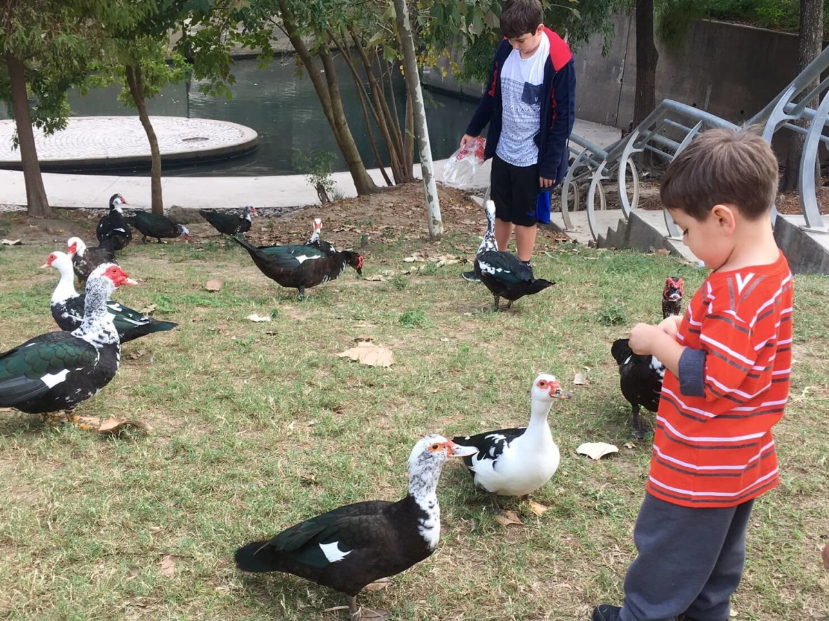 Buffalo Bayou Park kid feeding ducks