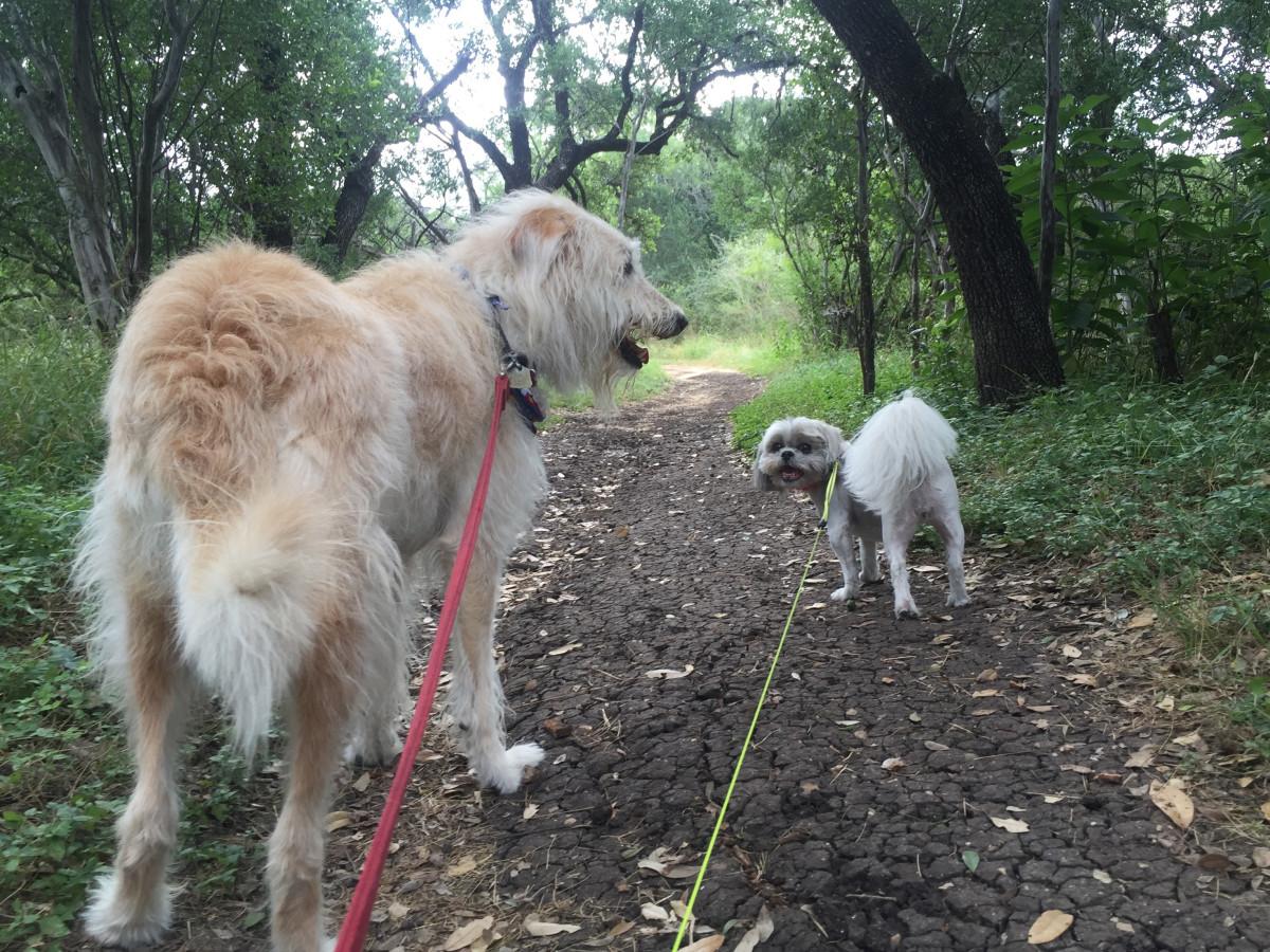 Phil Hardberger Park dogs