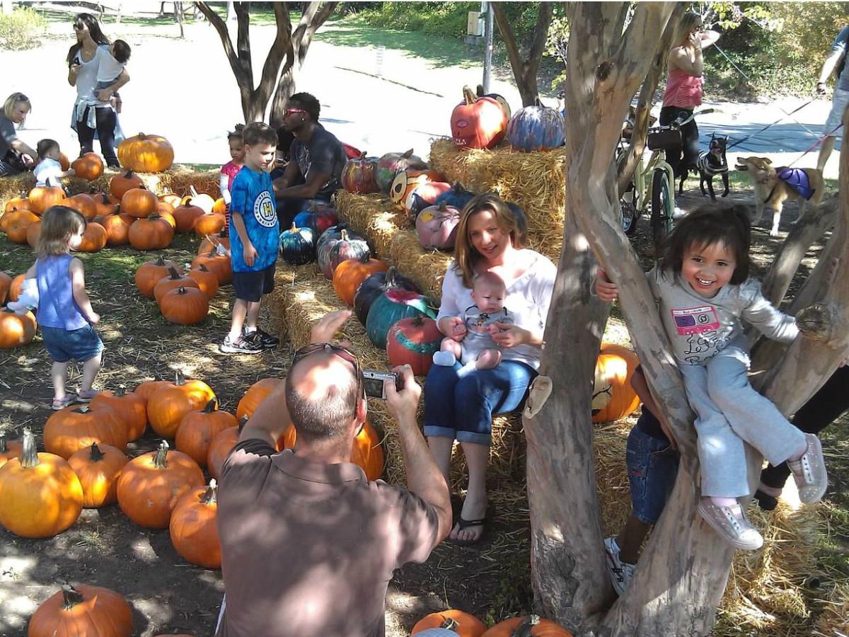 Turtle Creek Association presents Pumpkins in the Park