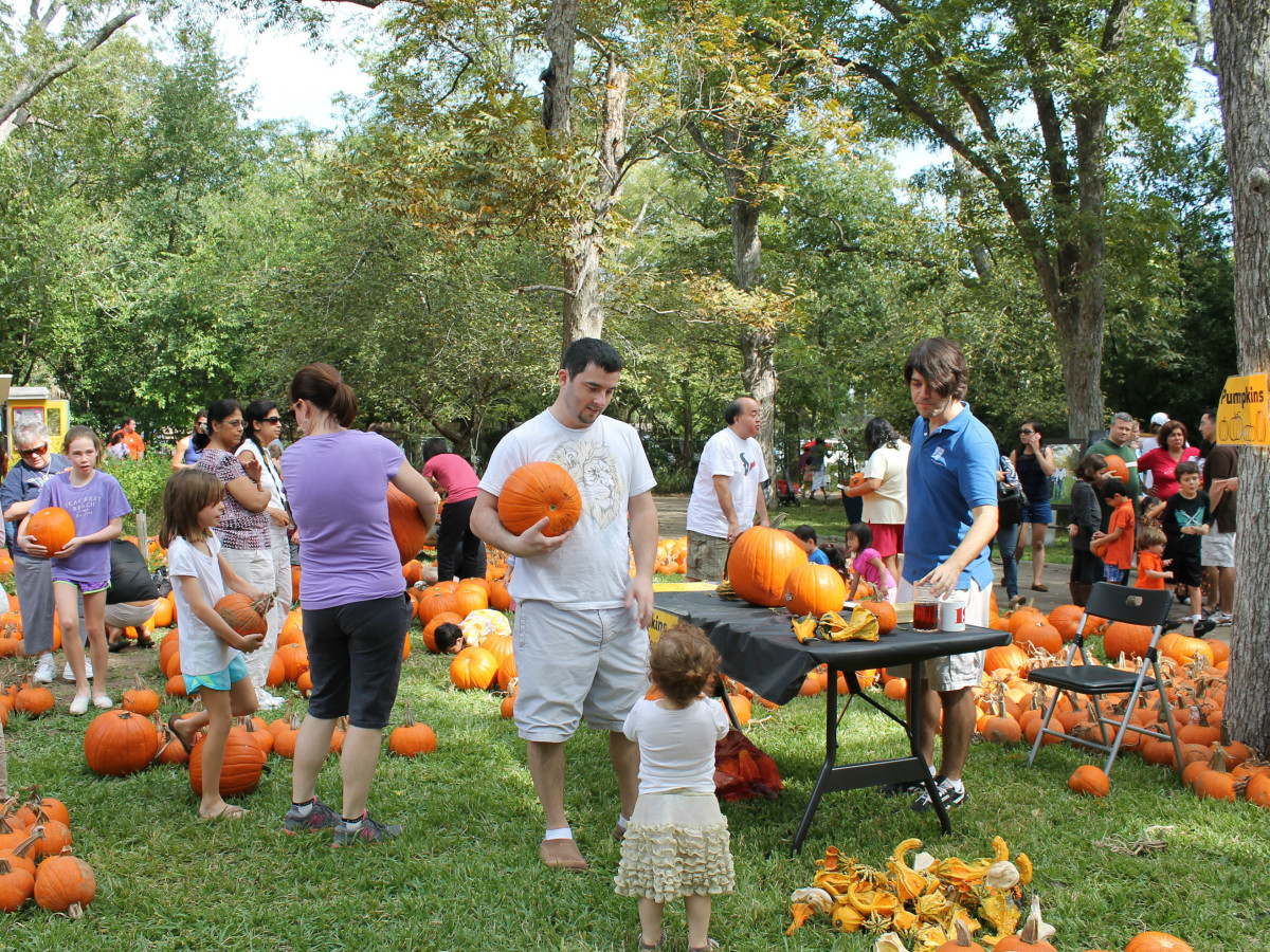 Pumpkin Patch & Fall Festival