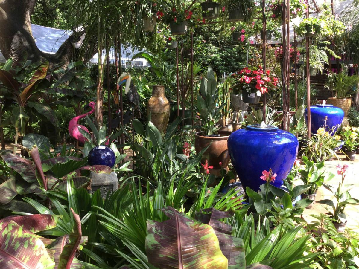 The Great Outdoors Austin nursery plants