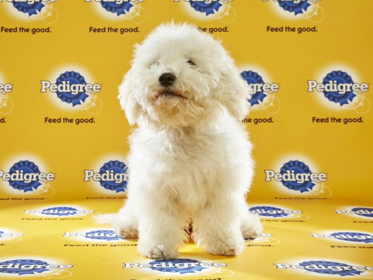 Puppy Bowl 2016 Poppy dog Sherry Stephens Animal Planet