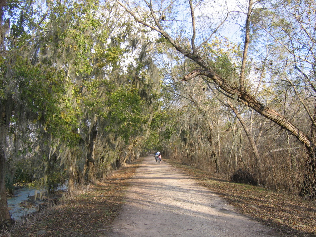 Brazos Bend hiking trail