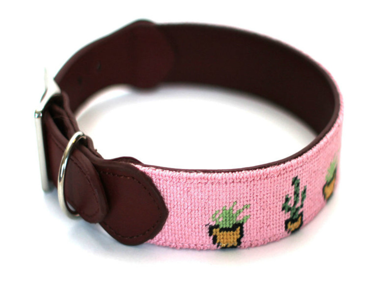 Cacti Dog Collar The Distillery Market