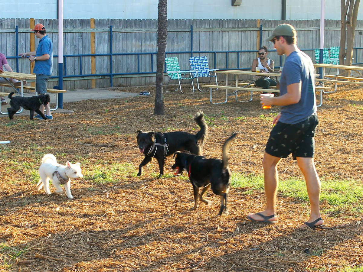 Yard Bar Austin restaurant dog park Burnet Road