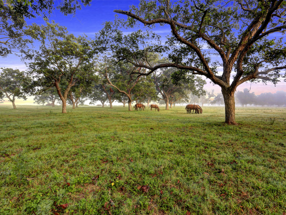 News, Shelby, On the Market, Pecan Acres ranch, August 2015
