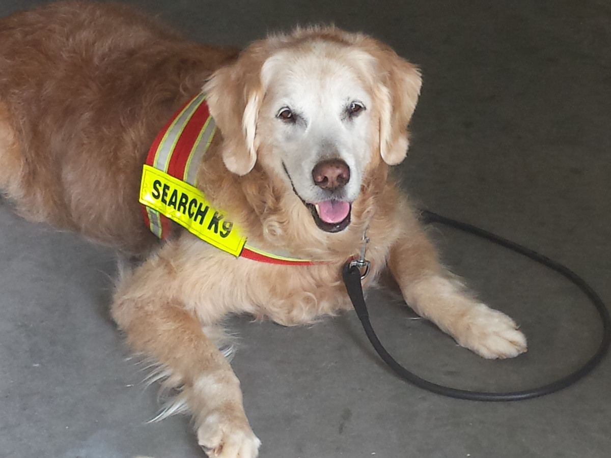 News, Shelby, Bretagne rescue dog, July 2015