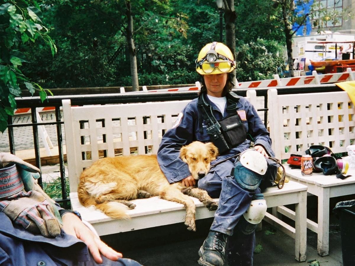 News, Shelby, Pet Set preview, July 2015, Bretagne