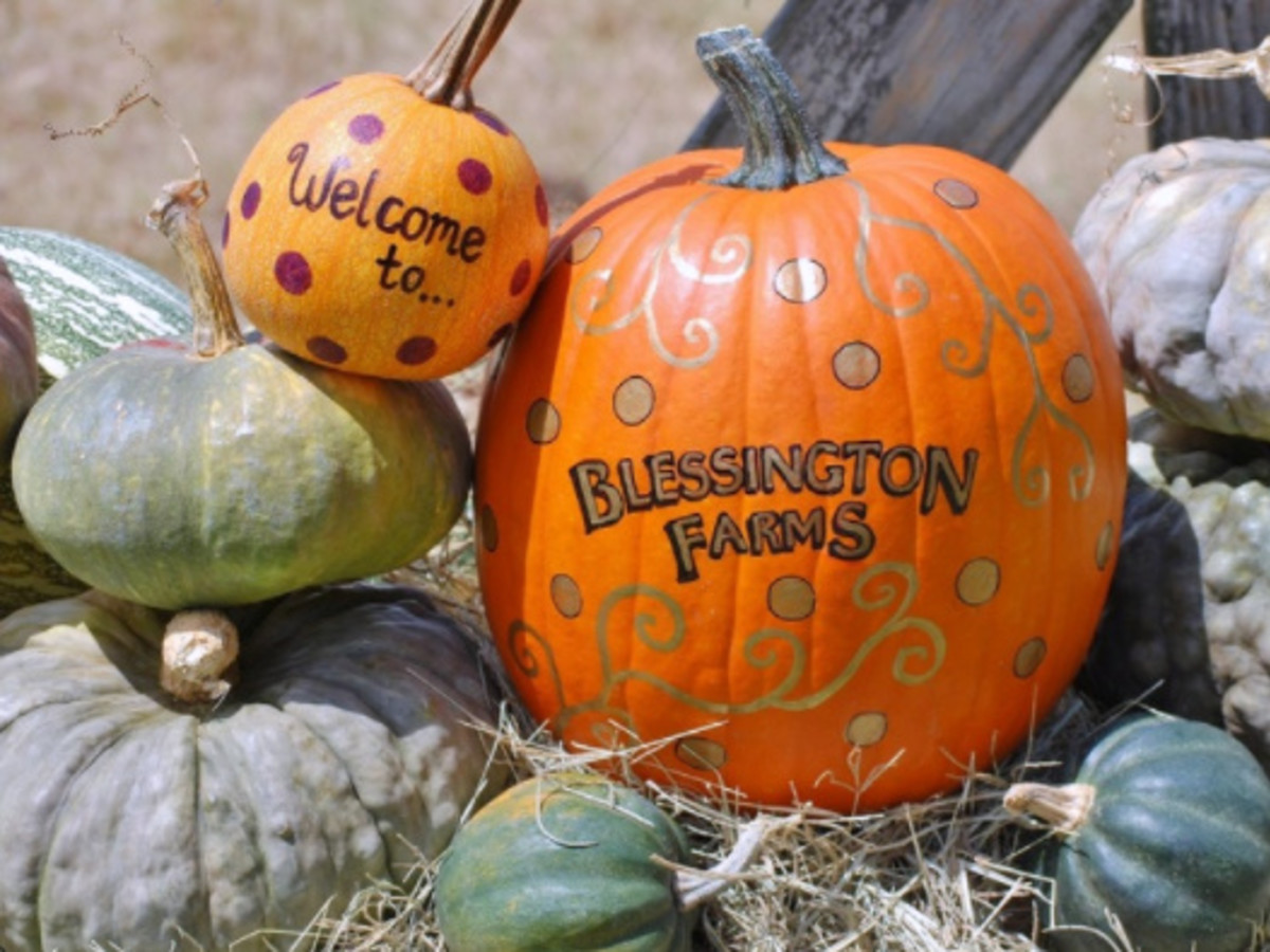 Blessington Farms' Pumpkin Patch and Fall Harvest Festival