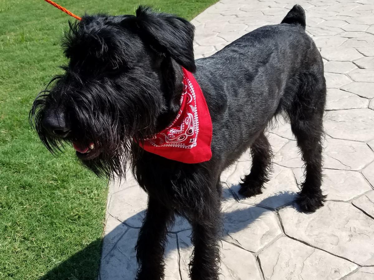 Houston, Pethouse Pet Buddy, October 2017