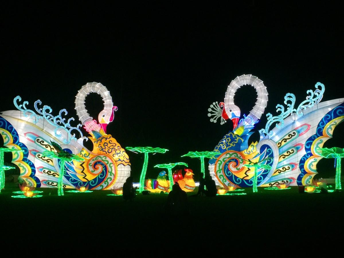 Holiday Wonder swans display