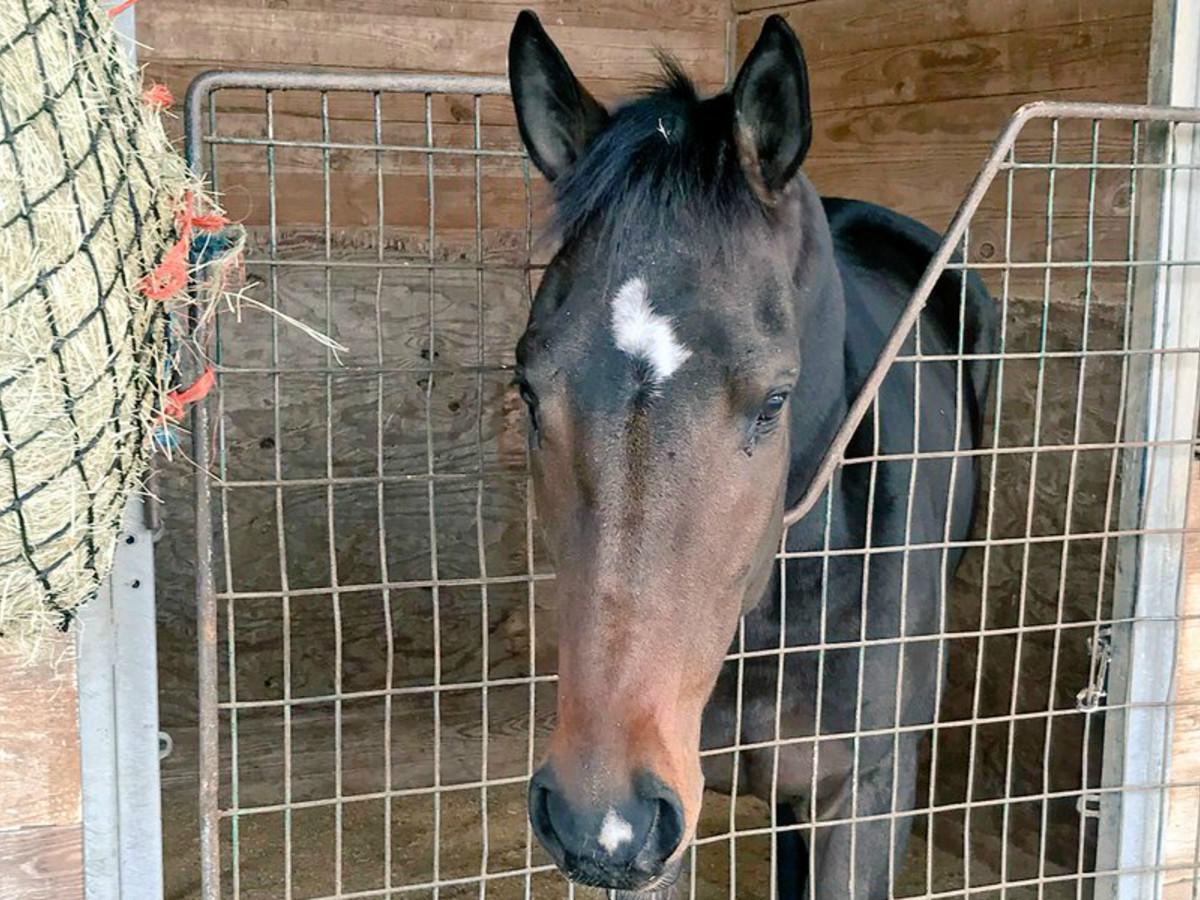 Horse Altuveatbat Ken Hoffman