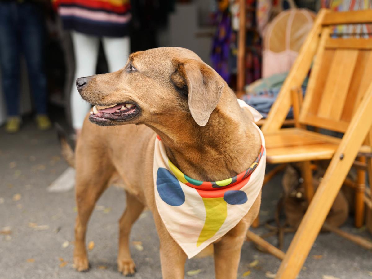 SXSW Street Style 2018 Dog ELOI Scarf