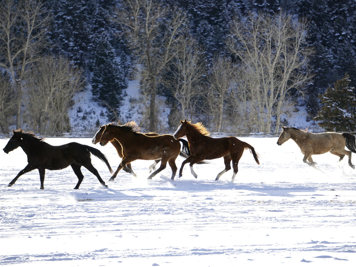 Hoffman - travel - horses running - Montana Ranch at Rock Creek