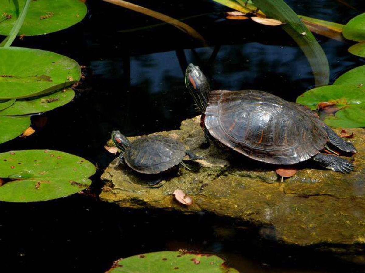 Mayfield Park Austin turtle