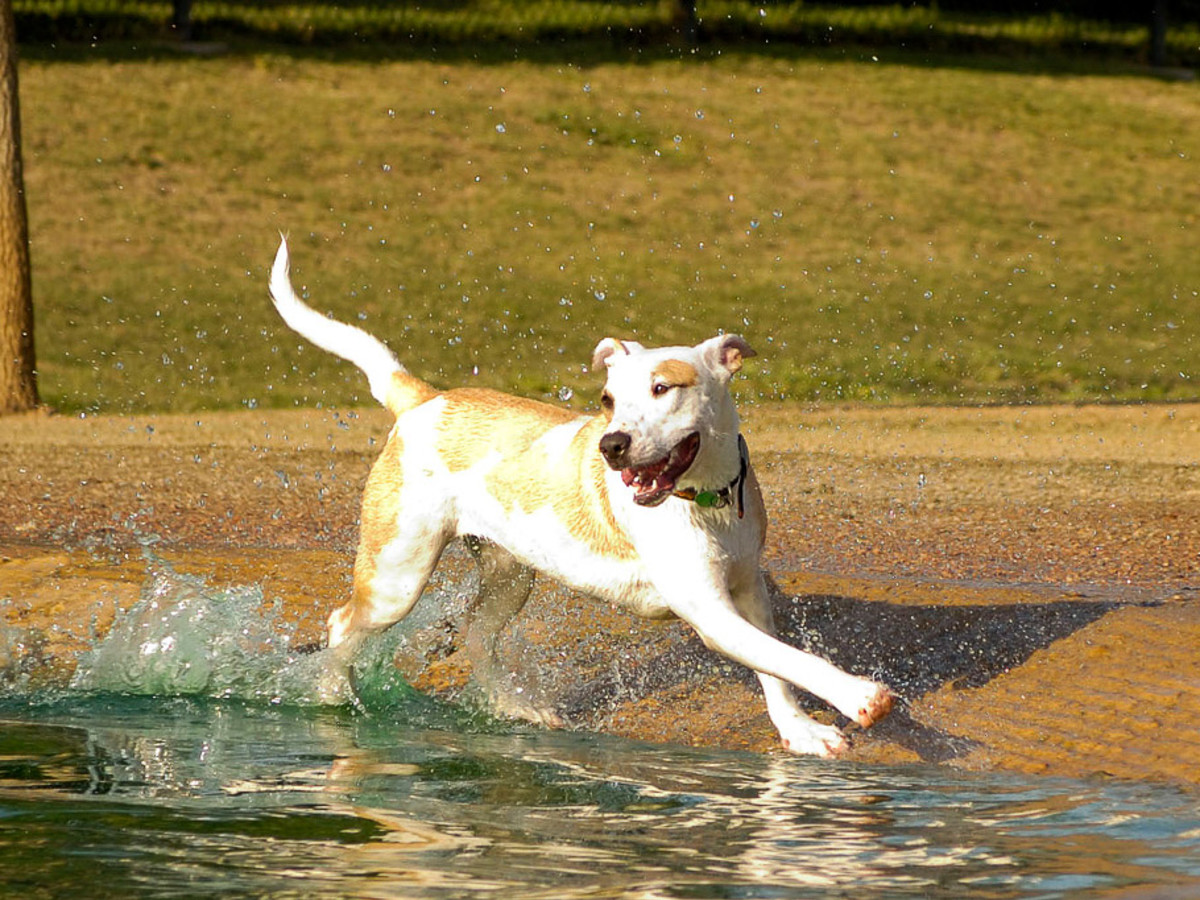 Dog playing in water at a park
