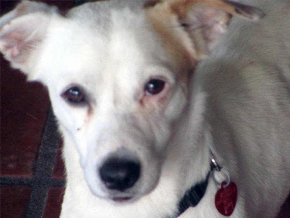 News_Paco_lost_dog_Delta