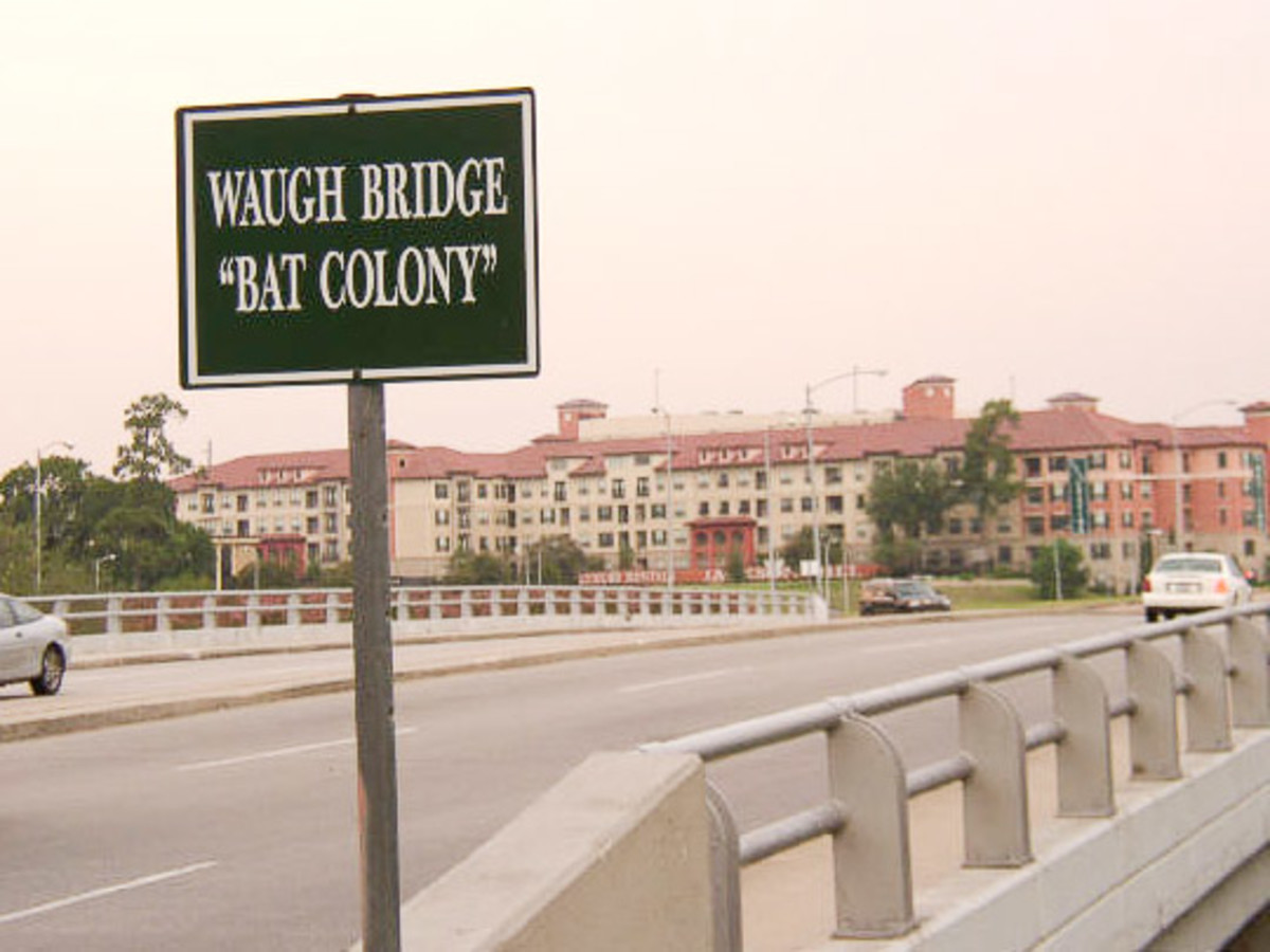 News_Waugh Bridge_Bat Colony_Sign