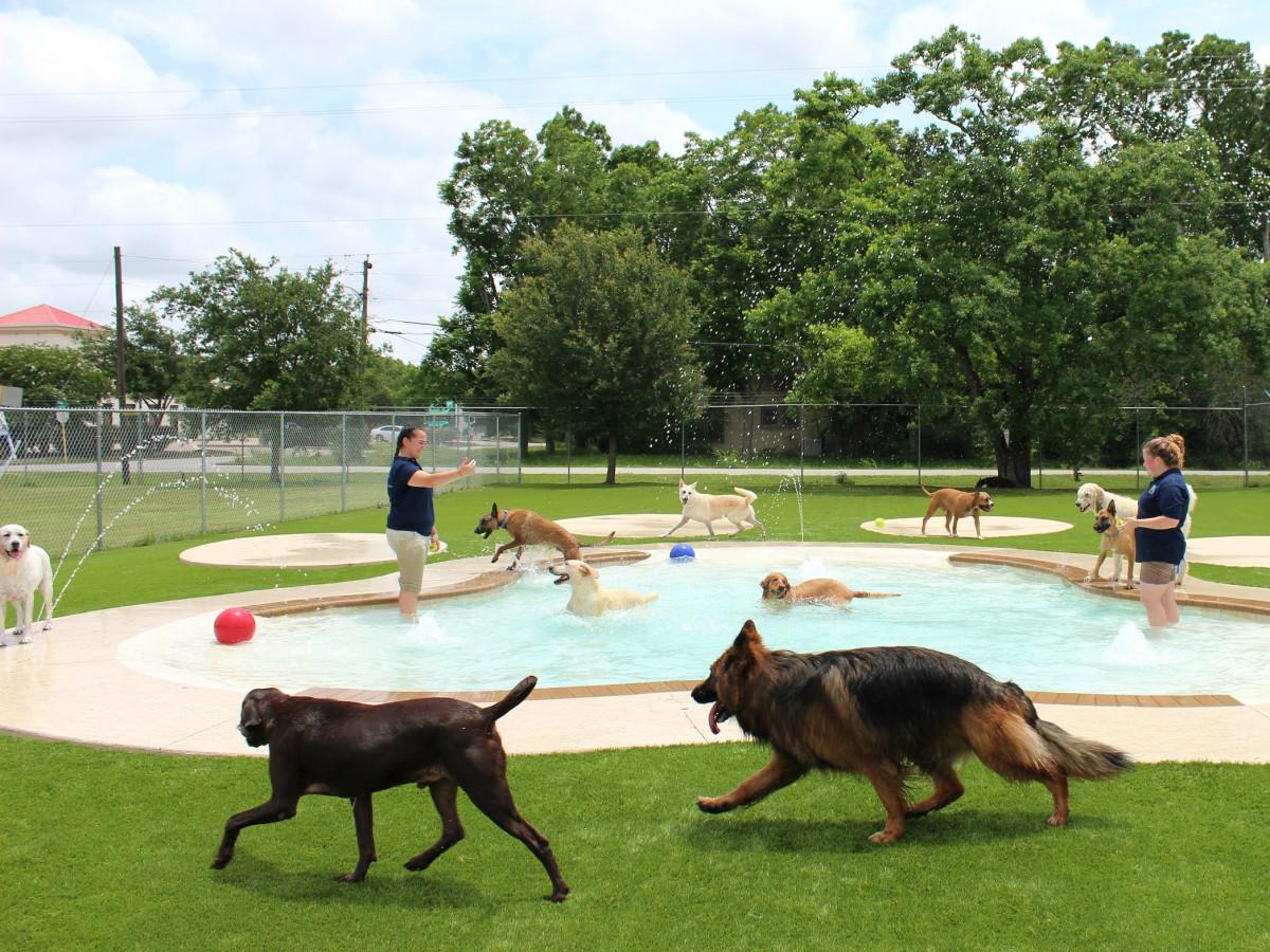 Oodles of Doodles Meadowlake Pet Resort dog pool