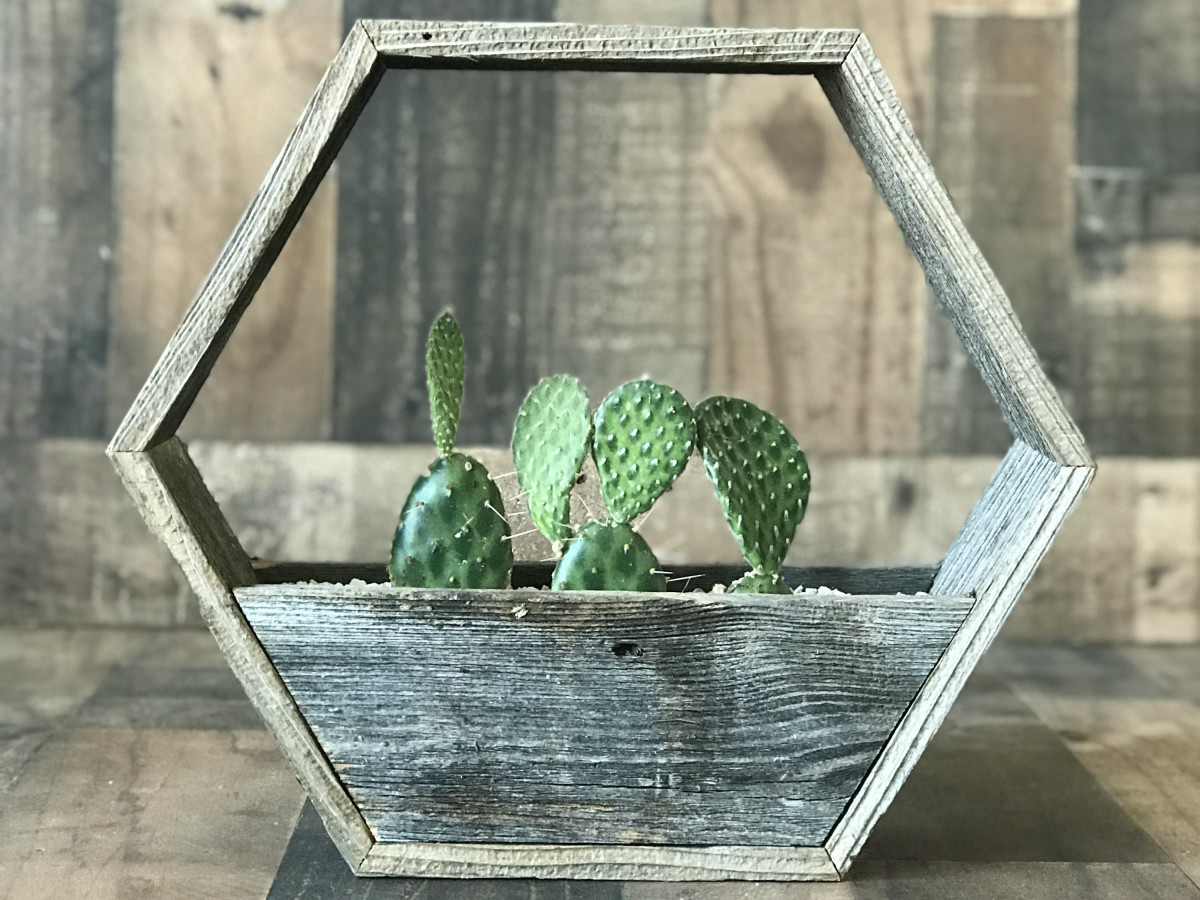 Eko Deko cactus