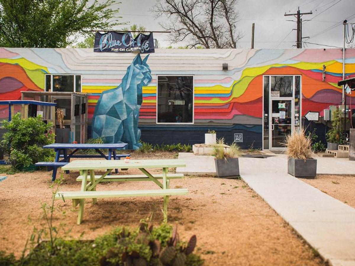 Blue Cat Cafe Austin