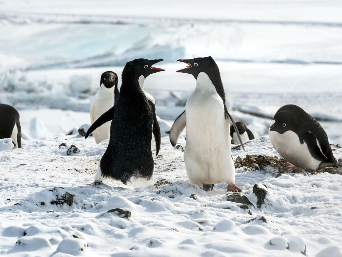 Scene from DisneyNature's Penguins