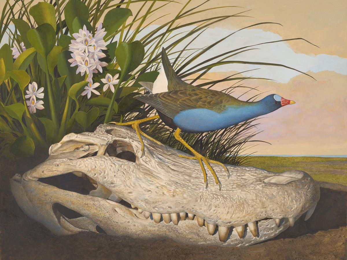 Seeing in Detail: Scott and Stuart Gentling's Birds of Texas