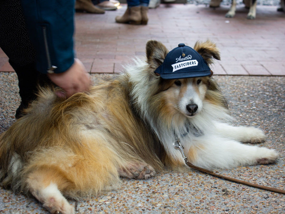 Dog wearing Austin Eastciders hat