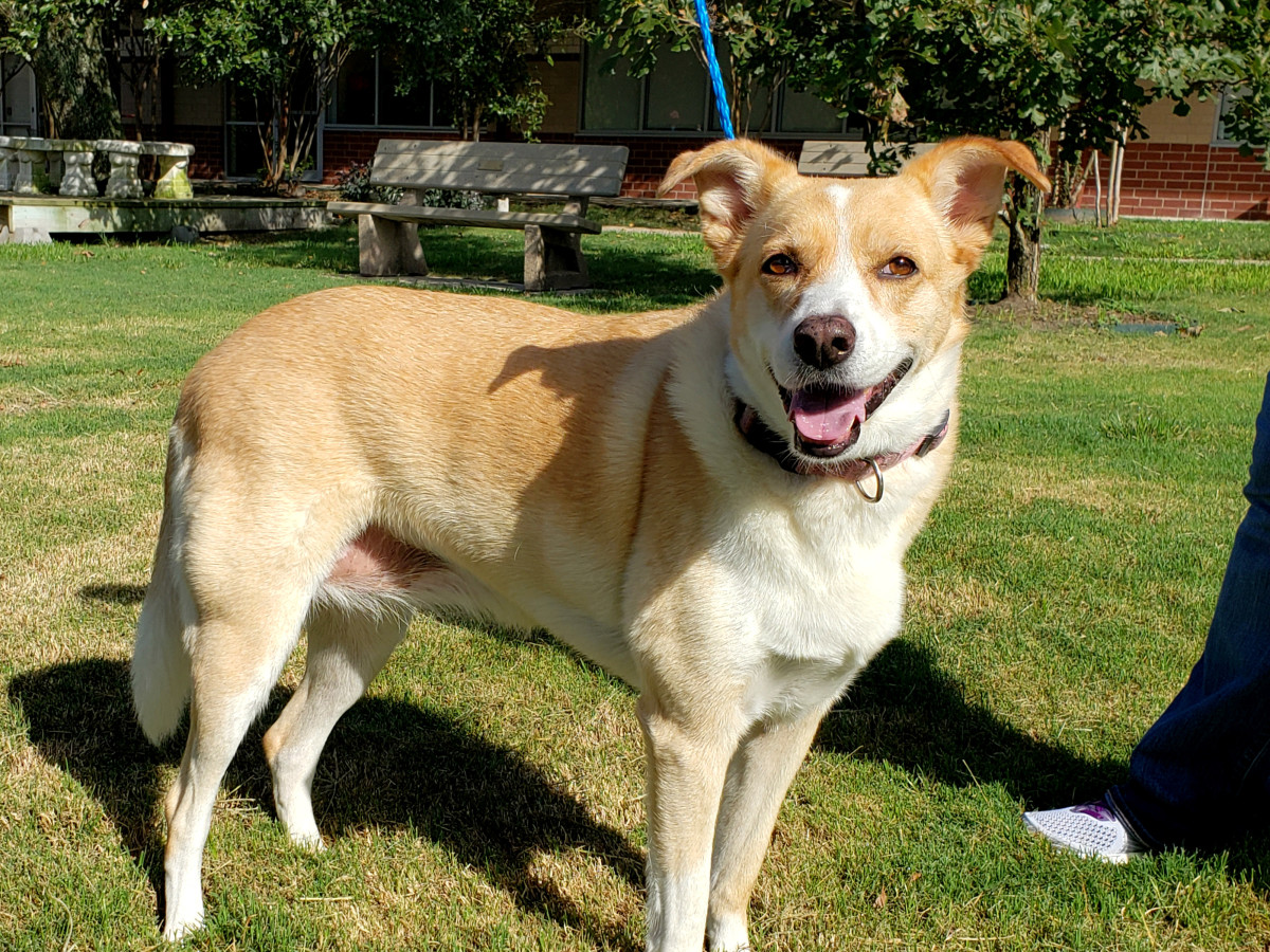 Pet of the week - Paisley retriever mix