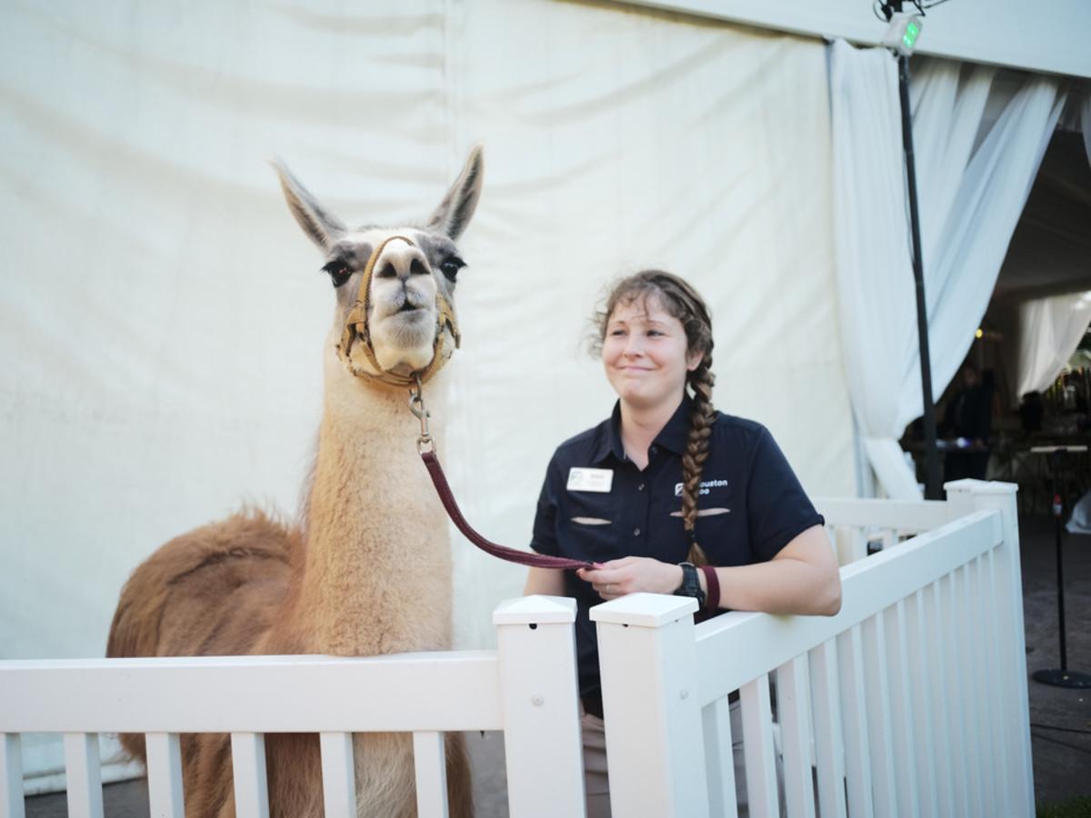 Houston Zoo Conservation Gala 2019 Fiesta Llama and Nikki