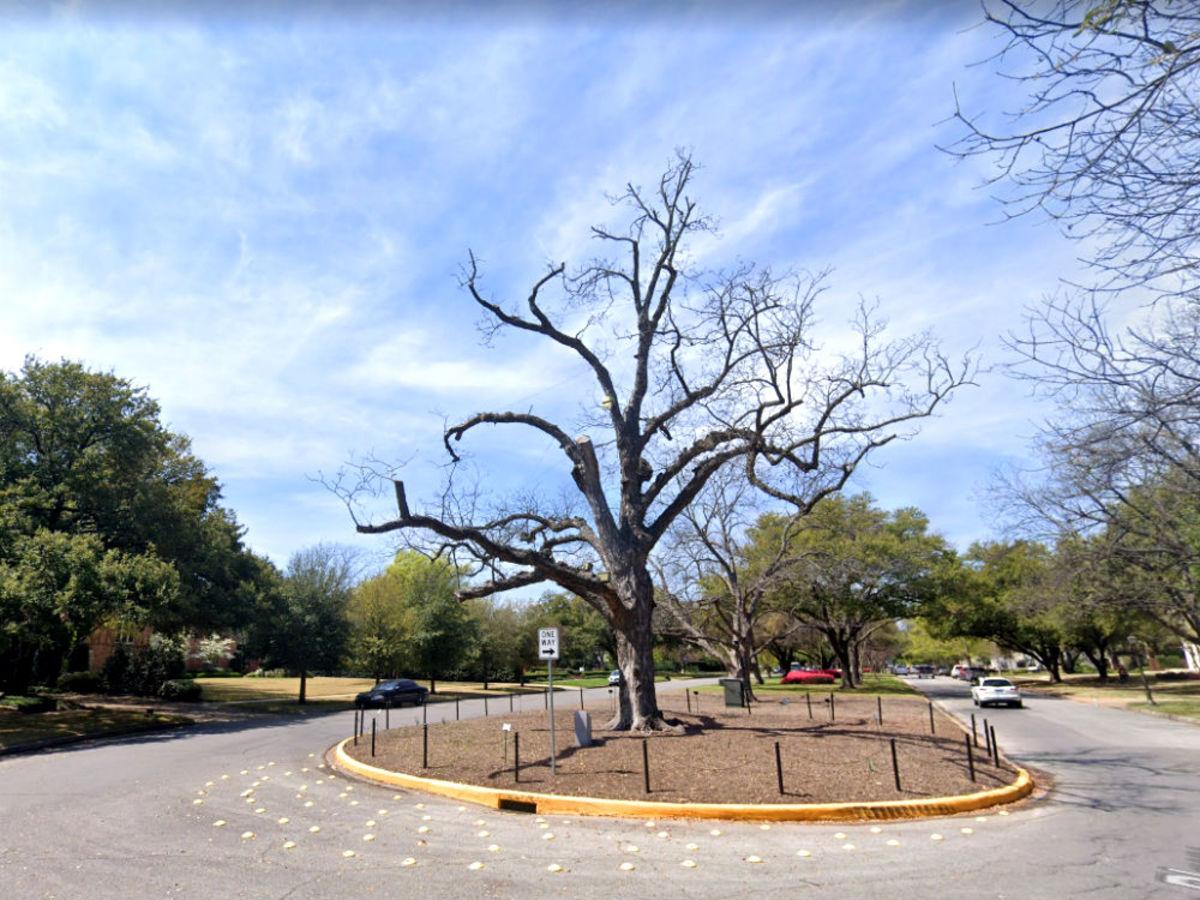 Big Pecan Tree