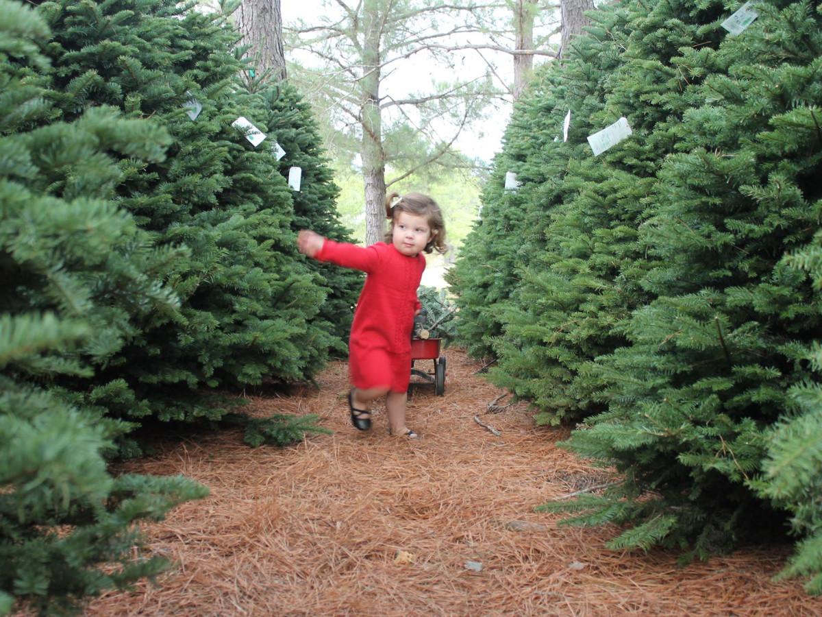 Evergreen farms Elgin christmas tree little girl wagon