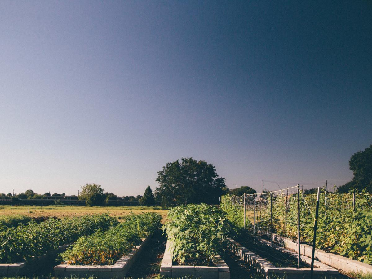 Hope Farms