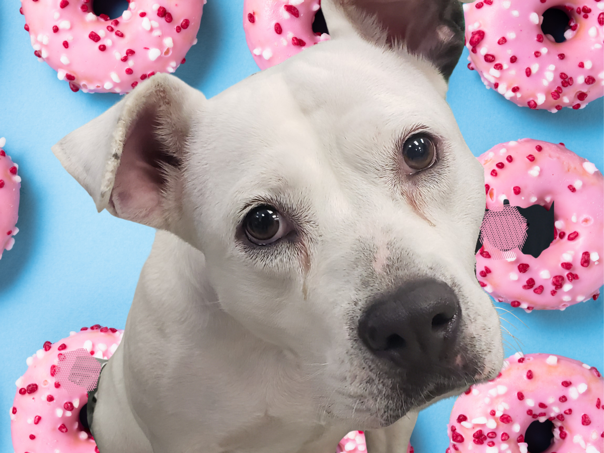 Pet of the week - Betsy Staffordshire mix
