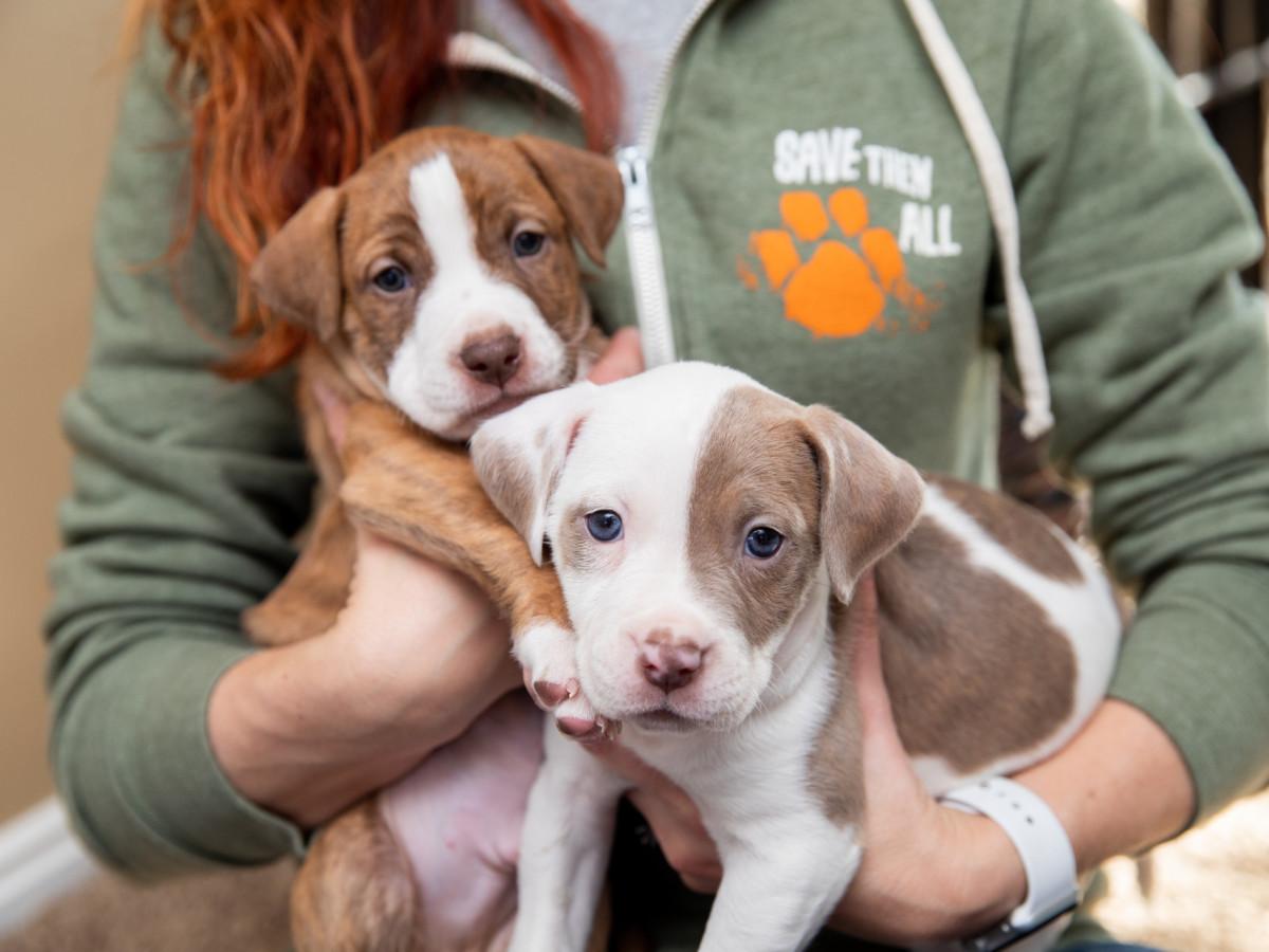 puppies Best Friends