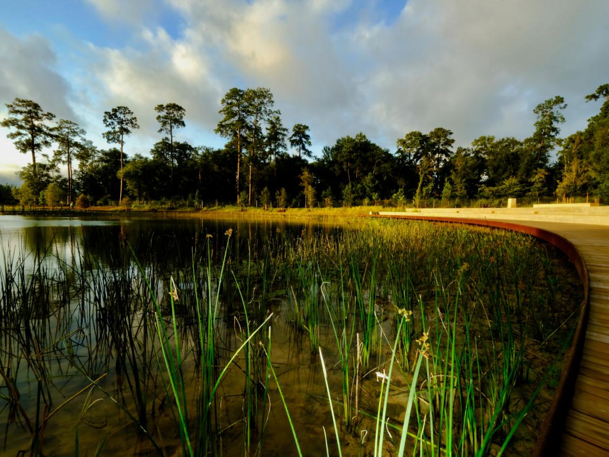 Memorial Park Eastern Glades wetlands
