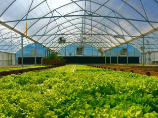Sustainable Harvesters presents Special Lettuce Tasting