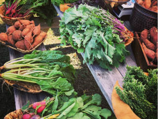Harvest Green Farmers Market