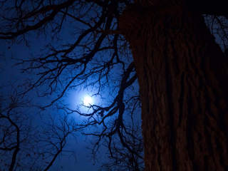 Heard Natural Science Museum & Wildlife Sanctuary presents Winter Night Hike
