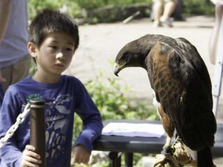 Austin Nature & Science Center presents Celebrate Urban Birds