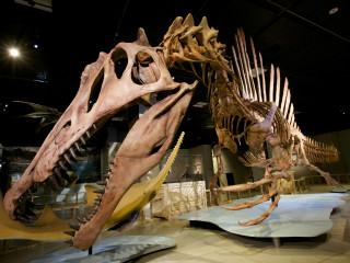 National Geographic Live Series presents <i>Spinosaurus: Lost Giant of the Cretaceous</i>