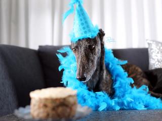 Greyhound Adoption League of Texas 16th Anniversary