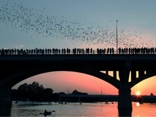 Austin Tour Company Bat Tuesdays