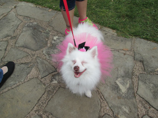 Participant in annual Mutt Strutt at Oak Cliff Earth Day