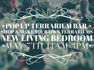 Pop Shop Houston presents Shop & Make Terrarium Pop Up