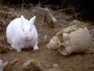 killer rabbit with skull from Monty Python and the Holy Grail
